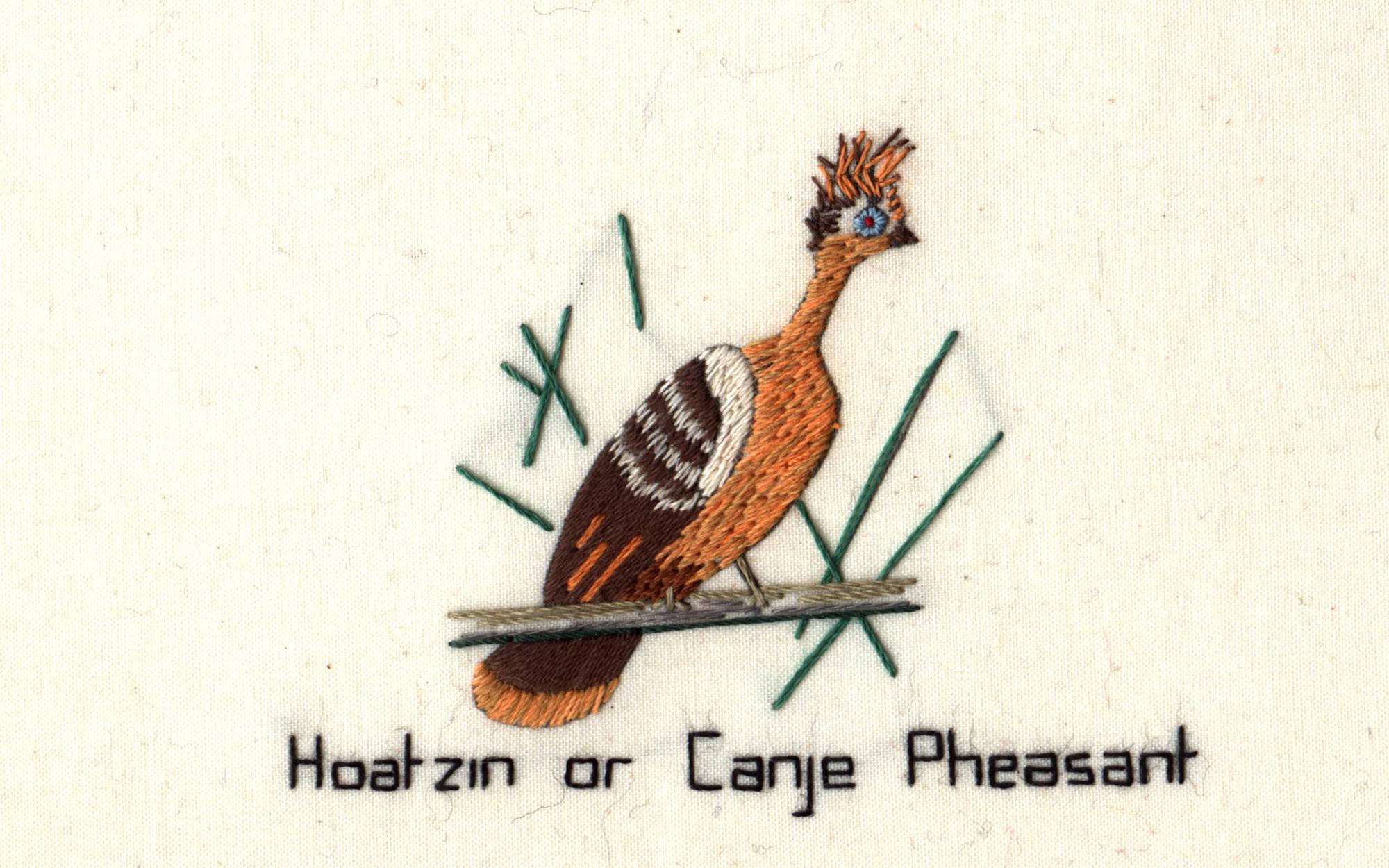 Canje Pheasant Kit